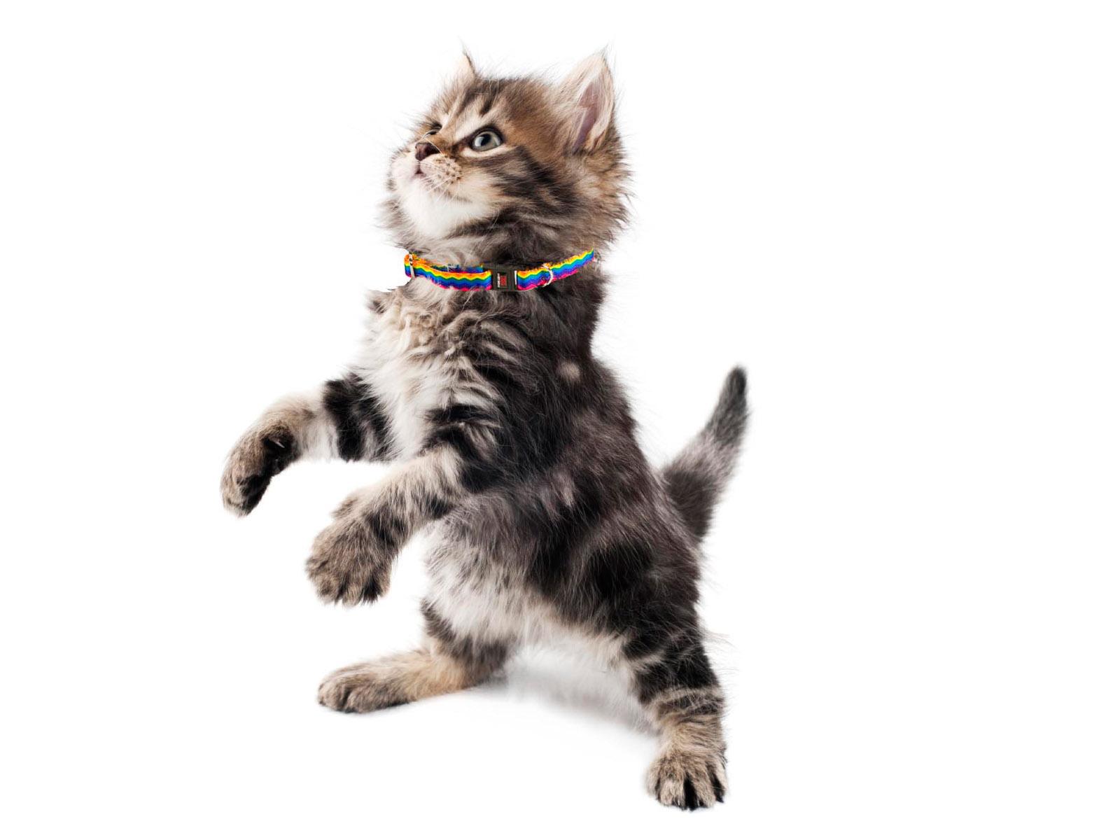 Premium Tufflock Cat Collars
