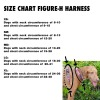 FIGURE-H HARNESS SIZE CHART IMAGE