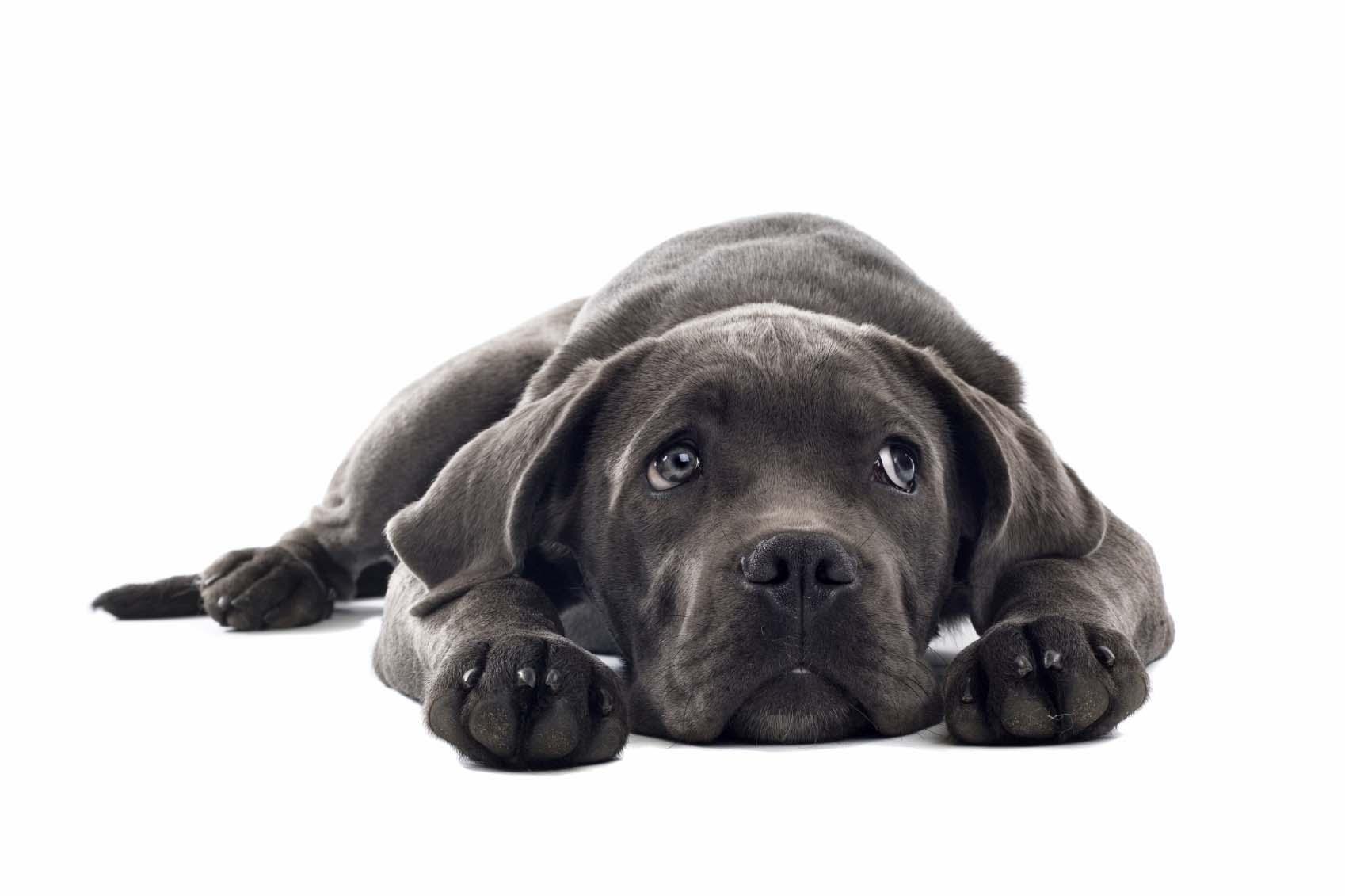 Premium Tufflock Dog Collars, Dog Harness